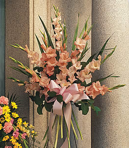 Sentimental Gladioli Spray