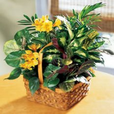 Plant Delivery Send Potted Plants Flowers Near